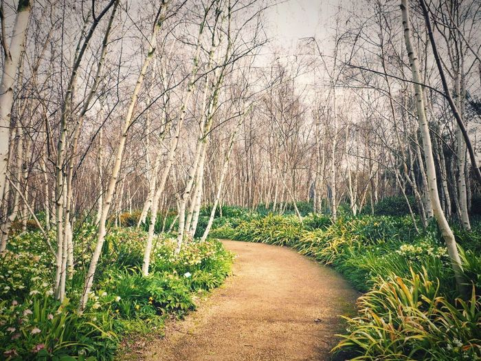 Walk Path Springtime Walk Forward Walkway Garden Plant Growth Beauty In Nature Tranquility No People Nature Day Tree The Way Forward Tranquil Scene Landscape Outdoors Green Color Footpath Scenics - Nature Environment Direction Field