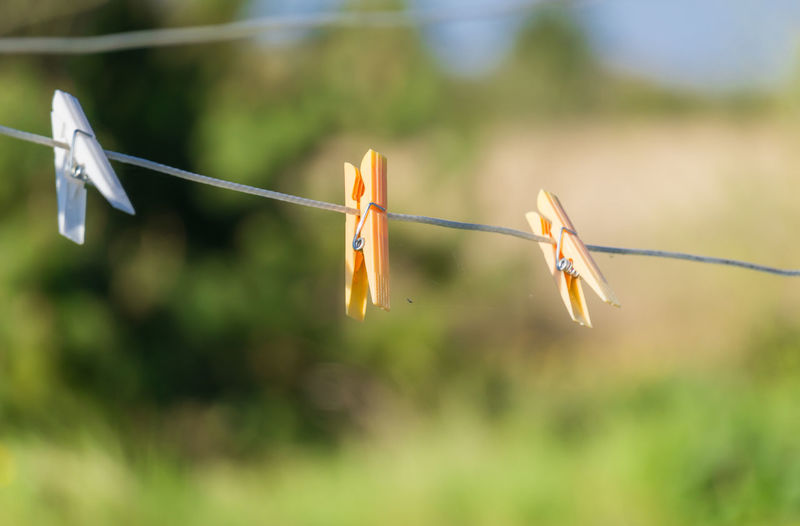 Household The Week On EyeEm Animal Themes Beauty In Nature Close-up Clothes Clothes Line Clothespin Day Flower Focus On Foreground Fragility Growth Hanging Household Objects Nature No People Outdoors Plant Water