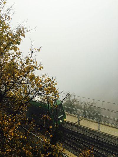 White Fog Foggy Tree Leaves Train My Best Photo 2015