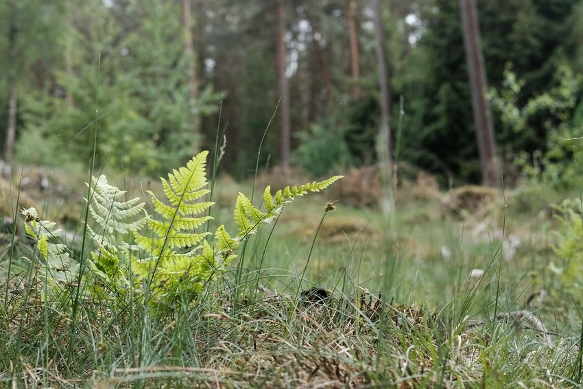Fern Fern Plant Nature_collection Nature Nature Photography EyeEm Nature Lover EyeEm Best Shots - Nature Tree Forest Plant Green Color Close-up