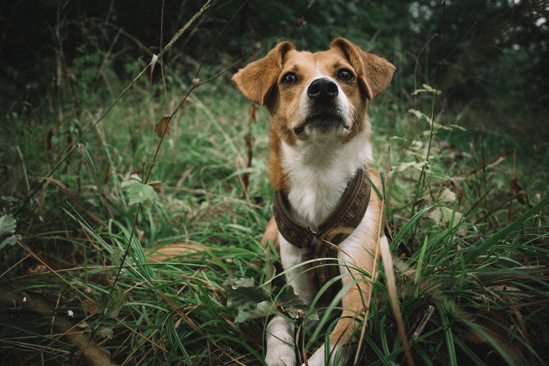 Close-up of dog looking up while sitting on grassy field