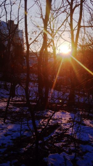Winter Sunset Trees Taking Photos