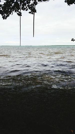 Sea Beach Water Tropical Climate Travel Destinations Big Pine Key Florida Keys