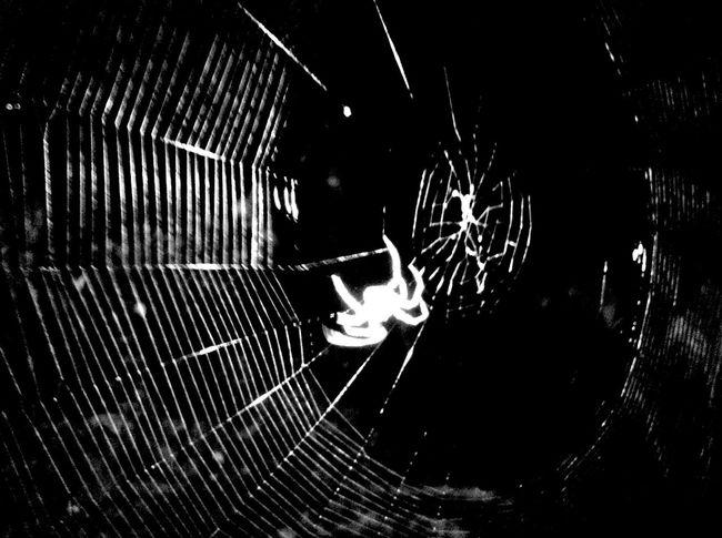 Introducción A La Arquitectura De La Muerte Black & White Nature Spiders Arachnid