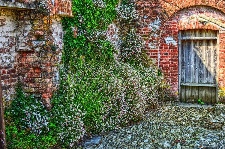 In a cottage garden. Brick Building Brick Wall Cottage Garden  Day Garden Architecture Garden Photography Green Color Growth No People Outdoors Plant Sunny Afternoon Sunny Day Terracotta Summer Exploratorium