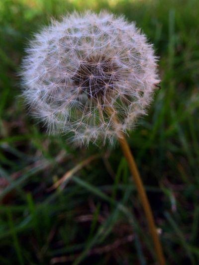 Wish. Nature Flowers