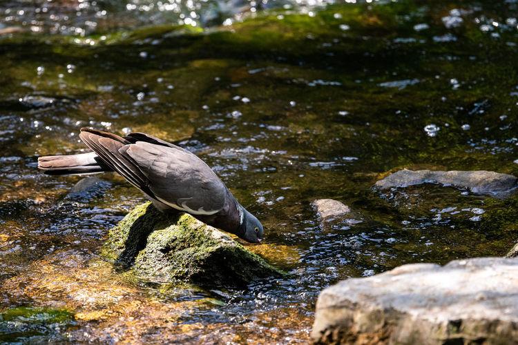 Bird on rock by lake
