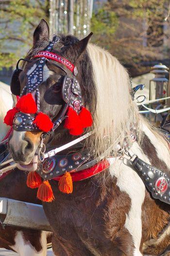 Close-up of dog riding horse
