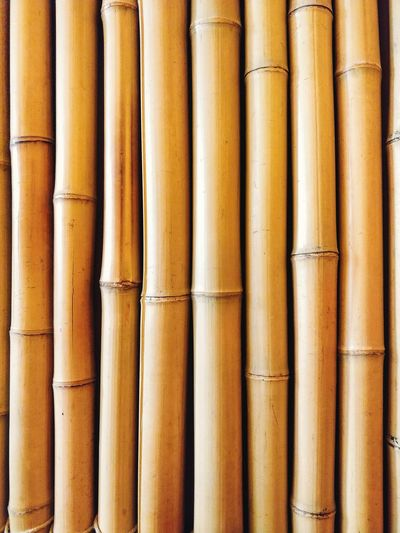 Day trip to Japan.. Bamboo Bamboo - Material Backgrounds Full Frame Textured  Yellow Industry In A Row Close-up LINE Abstract Backgrounds Architectural Design Color Gradient Architecture And Art Architectural Detail Abstract Parallel