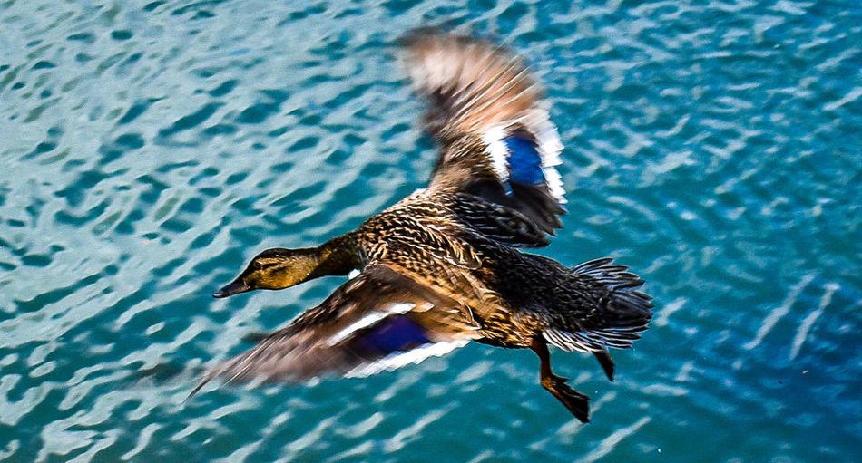 High angle view of a bird flying over lake