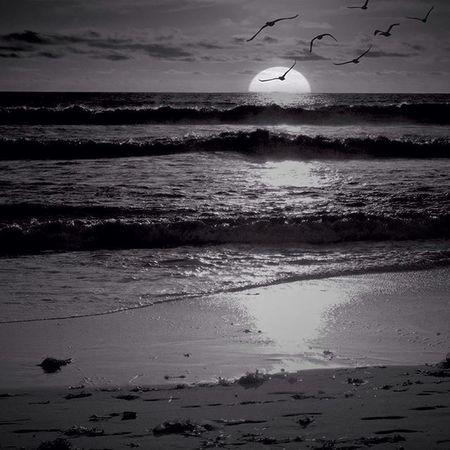 Everyday is a new beginning so take a deep breath and start again. Sunrise Ocean Breath Newbeginning Waves Inspiration Bnw_society