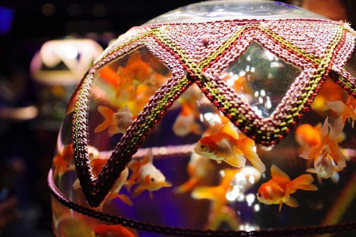 ナイトアクアリウム〜その1〜 Nightaquarium Aquarium Photography Aquarium Gold Fish Close-up
