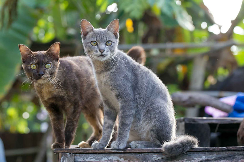 Domestic Pets Domestic Animals Mammal Cat Feline Domestic Cat Group Of Animals Looking At Camera Portrait Focus On Foreground Two Animals Vertebrate No People Day Sitting Whisker Animal Family