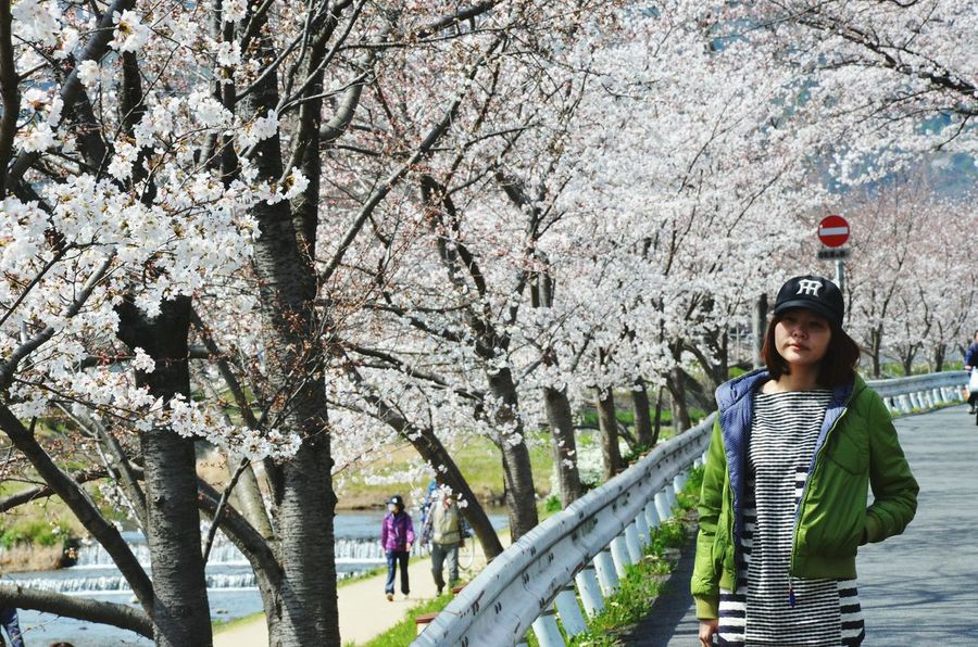 Hanami Hanami Sakura  Spring Into Spring Urban Spring Fever Kamogawa Enjoying Life Nature Sakura Hugging A Tree Cherry Blossoms Outdoors Lady Japanese Style Street Photography My Favorite Photo Ultimate Japan