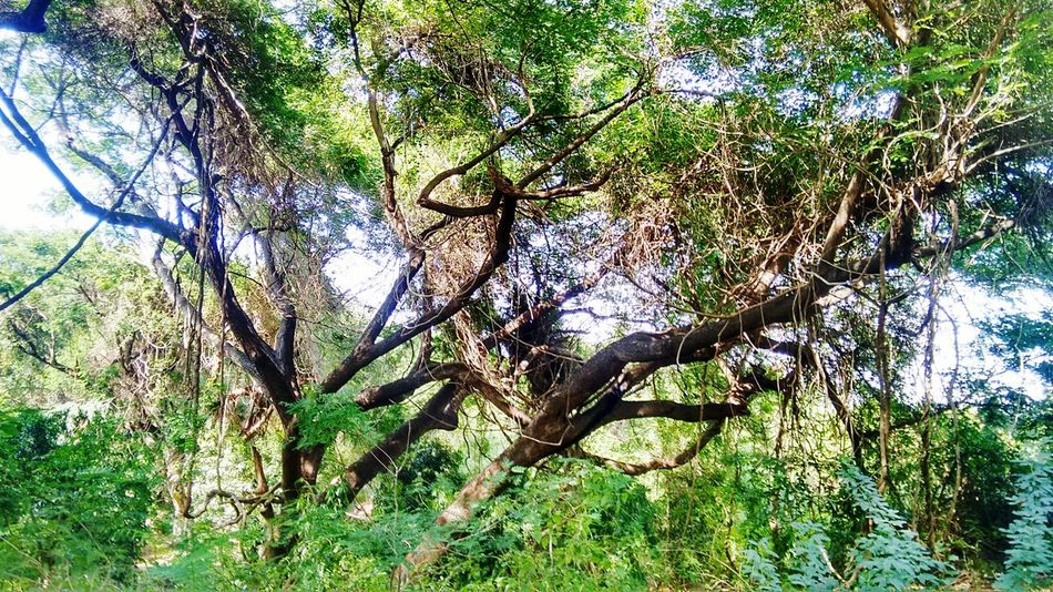 First Eyeem Photo Dam Greenify Sathanur