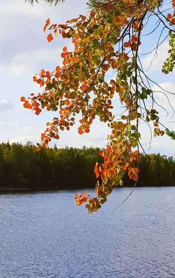 Leaf Tree Colourful Red Yellow Green Growth Water Lake Nature Hiking No People Outdoors Beauty In Nature Tranquility Calm Leaves Selective Focus Växjö  Sweden