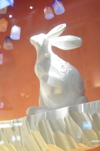 うさぎ Looking Up Rabbit 🐇 Close-up Animal Statue Animal Themes Lights Lighting Light And Shadow Window Display Window Display Photography Light Up Your Life Textures And Surfaces Textured  Statue Night Lights Reflection Night Street Streetphotography