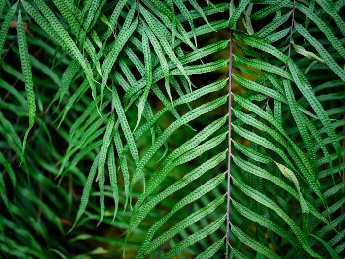 Green Color Growth Plant Plant Part Leaf Full Frame No People Backgrounds Close-up Beauty In Nature Fern Nature Day Pattern Natural Pattern Tree Outdoors Botany Freshness Tranquility Leaves Spiky