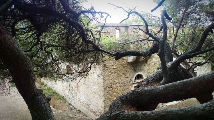 Taking A Trip Looking Around Built Structure Bare Tree Tree Architecture Beauty In Nature Porquerolles France