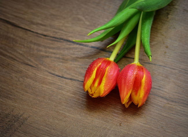 Tulips Close-up Day Food Freshness Green Color High Angle View Indoors  No People Red Red Tulips Table Wood - Material