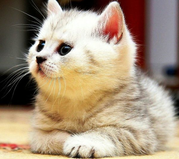 Meow Meow🐱 Check This Out Hi! Hello World Cute Kitten