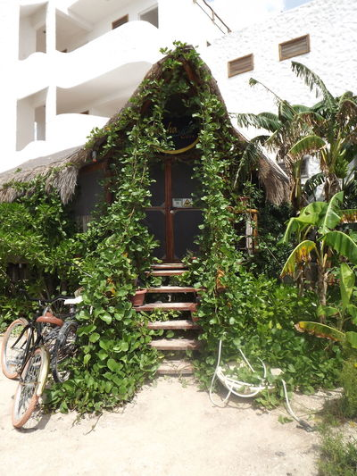 Holbox Holbox The Paradise Holbox Island Creeper Plant Plant Life Creeper Botanical Country House Water Wheel Growing Young Plant Mushroom Summer Sports