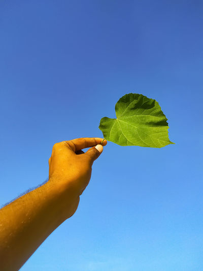 Low angle view of hand holding leaves against clear blue sky