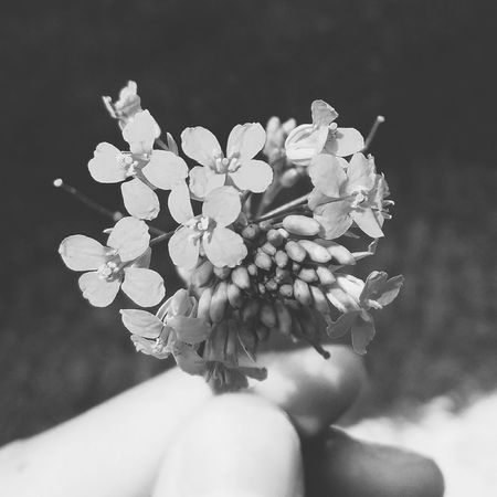 Hand Human Hand Hand And Flower Flower In Hand Sea Water Earth Human Hand Flower Flower Head Beauty Tree Close-up