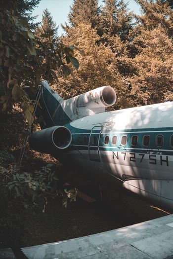 Landed in the forest Airplane No People Nature Transportation Tree Outdoors Travel Destinations Summer Exploratorium