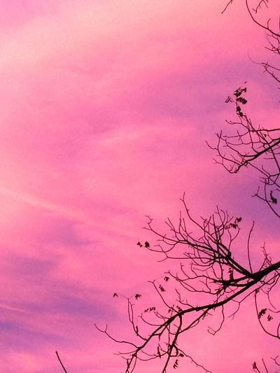 Pink sunset in november Pink Sky Tree Branches Sunset Silhouettes Longmont, Co