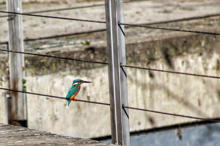 Bird on the wire - collection (homage L. Cohen) Premium Selection Outdoors Day City People