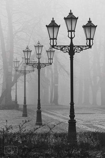 BYOPaper! Winter Street Light Lighting Equipment Outdoors City No People Foggy Morning