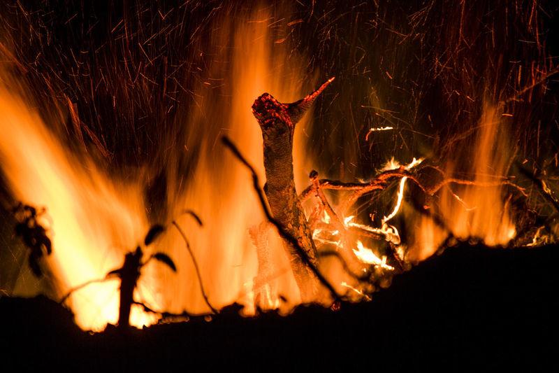 Close-up of burning wood at night