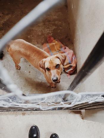 Dog Pets Adotenaocompre
