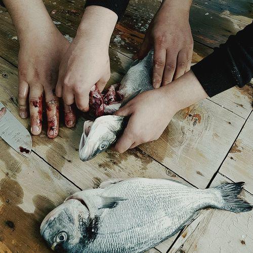 High angle view of man feeding fish