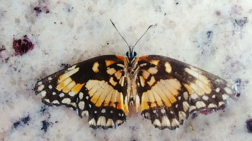 Butterfly - Insect Animal Animal Themes No People Creativity Nature Animal Wildlife Animal Body Part Beauty In Nature Day Close-up Insect