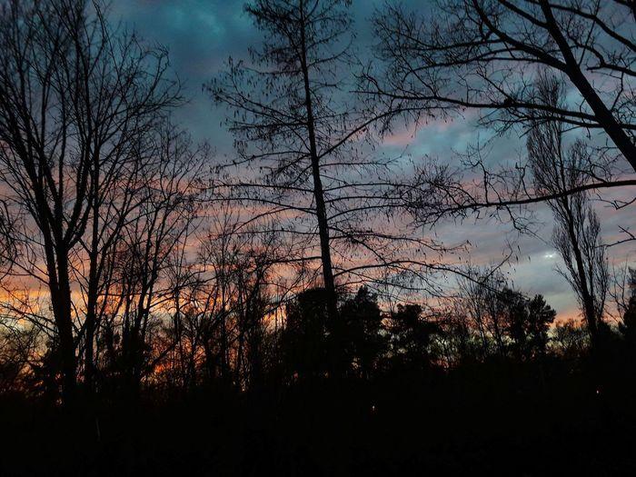Rio Islas Del Delta Río Espera Sensei Amanecer Tree Bird Sunset Silhouette Sky Cloud - Sky