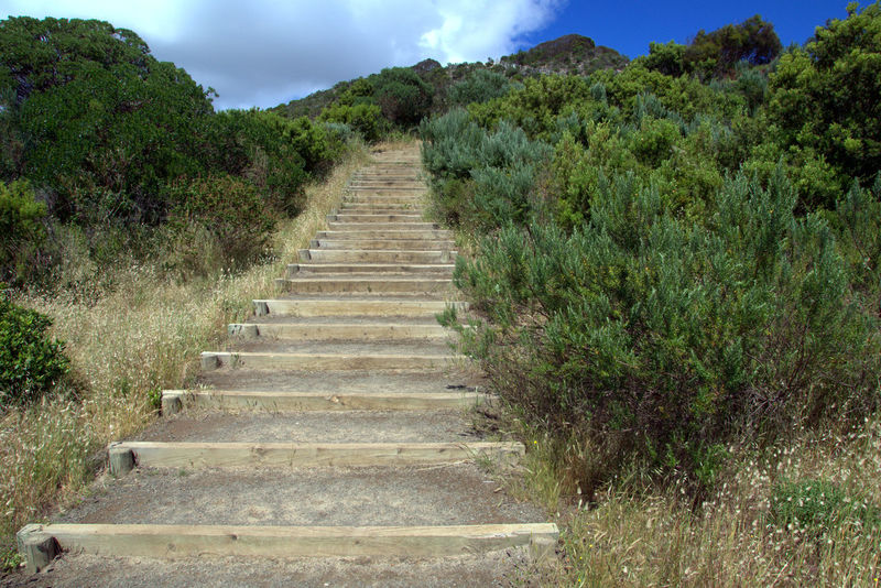 Australia Green Hiking Outback Plants Stairway Cloud - Sky Day Grass Growth Kangaroo Island Landscape Nature No People Outdoors Plant Sky Staircase Stairway To Heaven Stairways Steps Steps And Staircases The Way Forward Tree