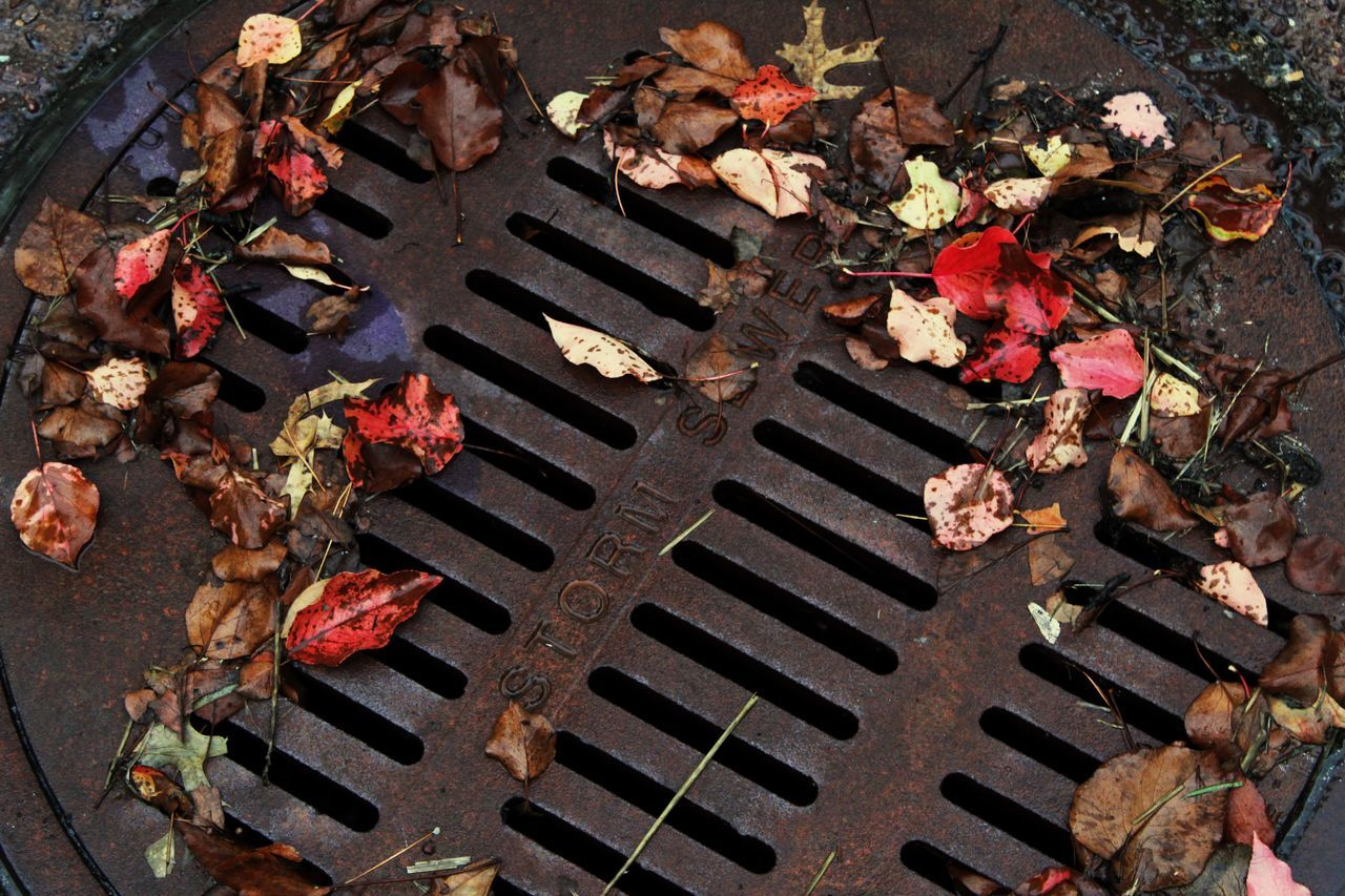 high angle view, flower, flowering plant, no people, leaf, plant part, nature, plant, day, metal, outdoors, metal grate, beauty in nature, grid, grate, close-up, manhole, freshness, autumn, petal, wheel