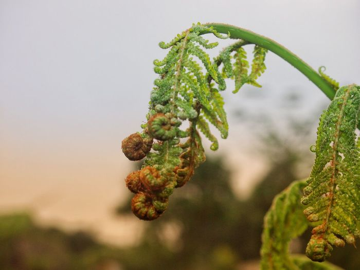 Beautifull fern Leaf Fern Nature Green Fresh Sunrise Forest Tree Branch Fruit Pine Tree Pinaceae Sky Close-up Plant Green Color Botany My Best Photo