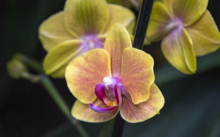 Orchideen -
