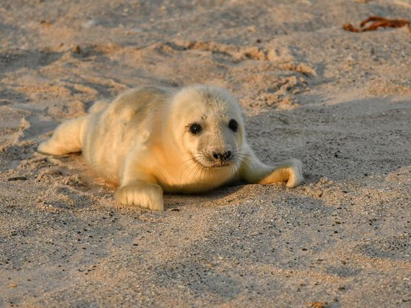 • Hello • EyeEm Nature Lover EyeEm Best Shots - Nature Helgoland Helgoland_collection Cute Animal Animal Animal Themes Sand Animal Wildlife Animals In The Wild Land One Animal Nature Seal - Animal No People Lying Down Mammal Young Animal Outdoors Day