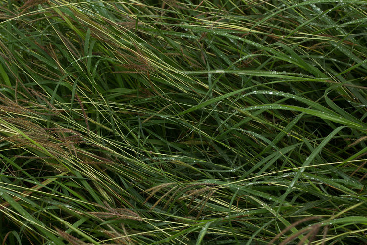 Backgrounds Beauty In Nature Blade Of Grass Close-up Clump Of Grass Day Detail Dew Field Focus On Foreground Forest Lawn Fragility Full Frame Grass Grass Grassy Green Green Color Growth Natural Pattern Nature No People Plant Selective Focus