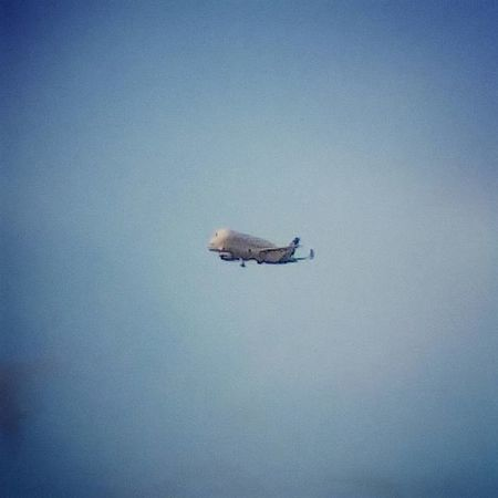 Beluga Airbus coming into land over Chester. Plane Aircraft Airbus Beluga Sky Flight