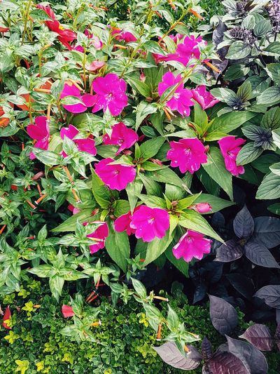 Day Outdoors Growth No People Nature Leaf Plant Beauty In Nature Flower Blooming Flowerbed Flower Head Springtime Nuremberg Germany 🇩🇪 Deutschland Nuremburg Castle Red Flower Flowers Petal Beauty In Nature Growth Plant Pink Pink Flower Pink Flowers