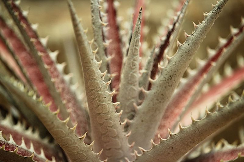 Science Full Frame UnderSea Thorn Cactus Close-up Barrel Cactus Prickly Pear Cactus Blooming Magnification Aloe Vera Plant Sharp Succulent Plant Anatomy Needle - Plant Part Microscope Cell Fiji Saguaro Cactus Microbiology Microscope Slide Razor Wire Barbed Wire Human Skeleton Human Bone Spiky Spiked Aloe