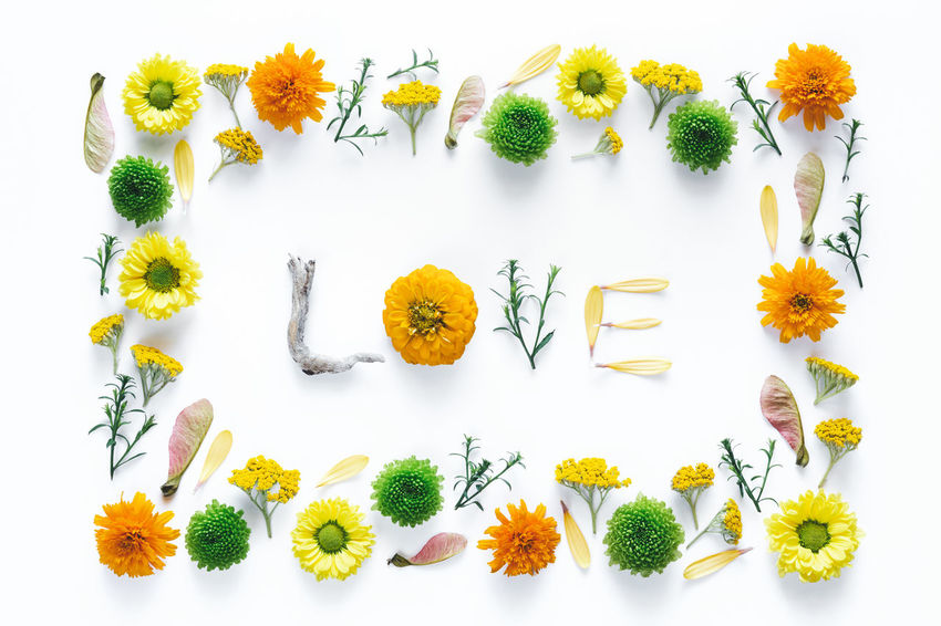 """Word """"Love"""" made of flowers on white background. Above Arrangement Close-up Composition Flower Flower Head Fragility Freshness Green Color Love Multi Colored Nature Orange Color Pattern Petal Plant Romance Single Word Studio Shot Symbol Text Variation White Background Word Yellow"""