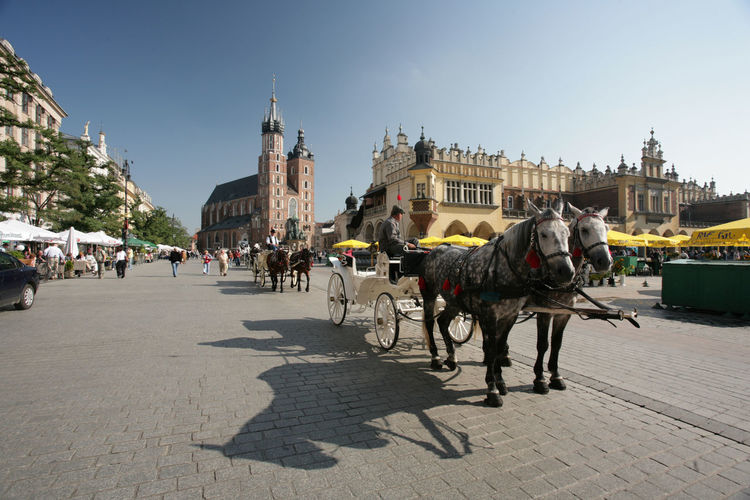 Kraków, Poland Poland Cab Cracow Domestic Animals Hackney History Horse Horse Cart Horsedrawn Krakow Polen Transportation Travel Destinations Working Animal