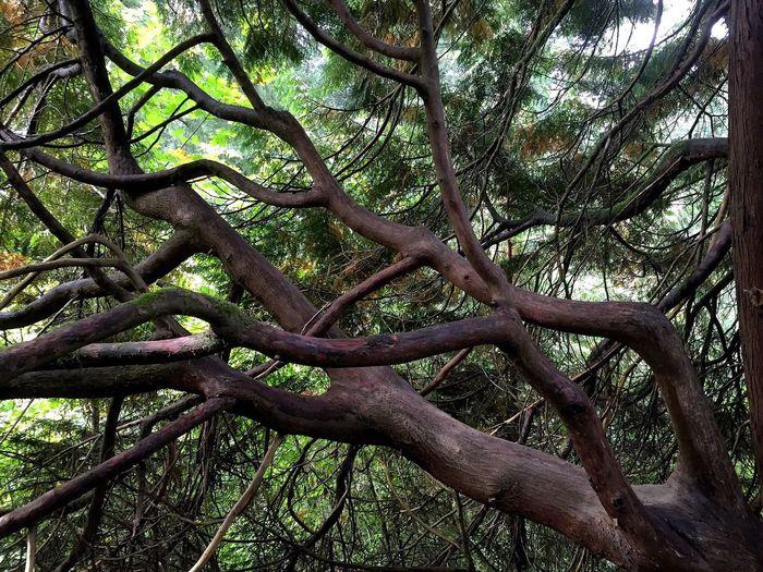 Hoytarboretum Portlandia forest