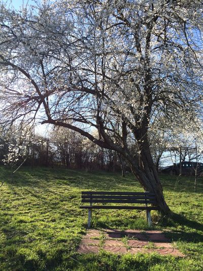 Absence Bare Tree Beauty In Nature Bench Branch Day Empty Field Grass Grassy Green Color Growth Landscape Lawn Nature Park Park - Man Made Space Park Bench Scenics Sky Sunlight Tranquil Scene Tranquility Tree Tree Trunk